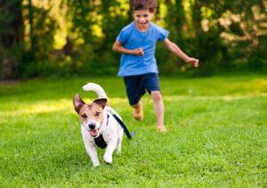 chien pour un enfant en bas age